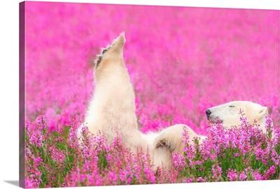 Polar Bear Getting A Leg Up!