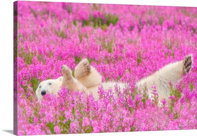 Polar Bear Waving In A Bed Of Fireweed