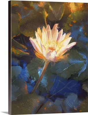 Beautiful Yellow Lotus Blossom, Single Waterlily Flower Blooming On Pond