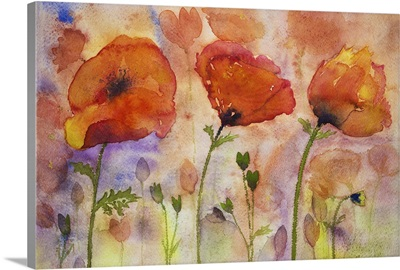 Colorful Poppies And Buds