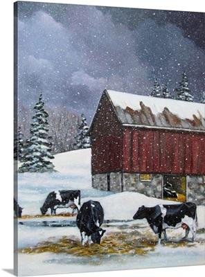 Holstein Cows In Snow