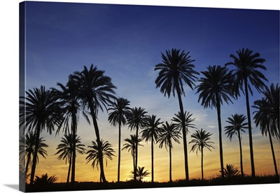 Palm Trees With Golden Sunset