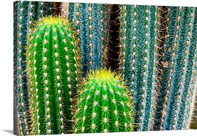 Tropical Green Cactus