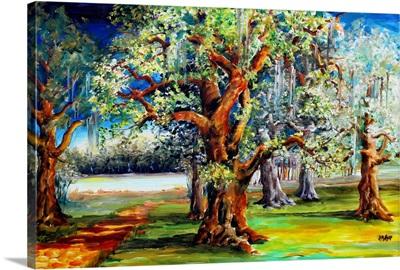 Oaks Along the Bayou