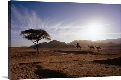 Africa, Egypt, Sinai Desert