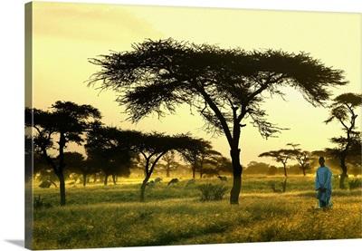 Africa, Senegal, Landscape near Dagana town