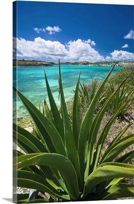 Antigua and Barbuda, Tropical vegetation along the Nonsuch Bay