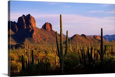 Arizona, Sonoran Desert, Organ Pipe Cactus National Park