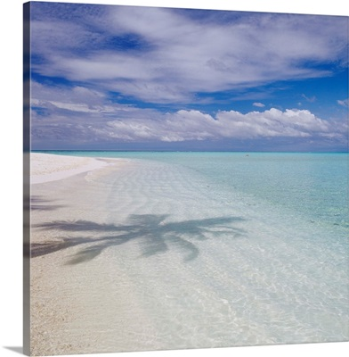 Asia, Maldives, Palm tree shandow on the water
