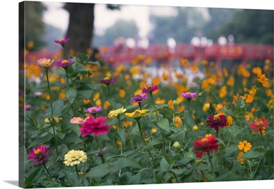 Asia, Vietnam, Hanoi, Flower bed and Huc Bridge, Hoan Kiem Lake