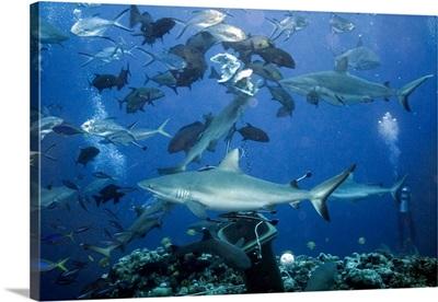 Australia, Queensland, Cairns, Oceania, Pacific ocean, Shark
