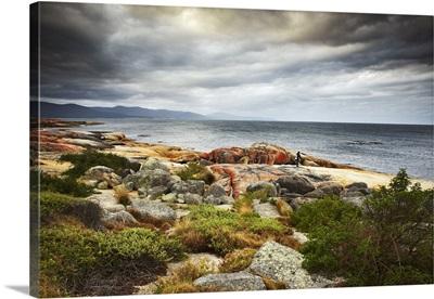 Australia, Tasmania, Bicheno, Diver at Bicheno foreshore
