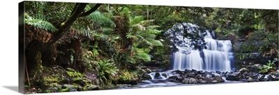 Australia, Tasmania, Oceania, Liffey Falls