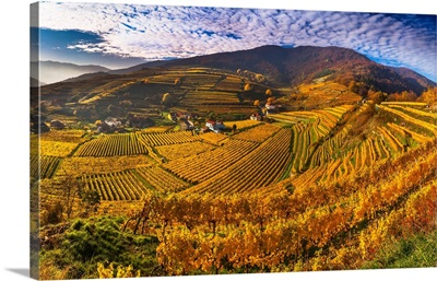 Austria, Lower Austria, Wachau, Spitz, Vineyards In Autumn