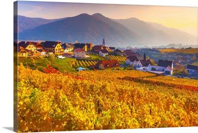 Austria, Lower Austria, Wachau, Weibenkirchen In Der Wachau, Vineyards In Autumn
