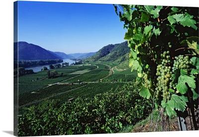 Austria, Niederosterreich, Durnstein, Vineyards and Danube river
