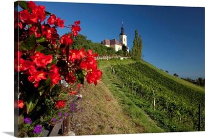Austria, Styria, Central Europe, Kitzeck im Sausal, Sausaler wine road