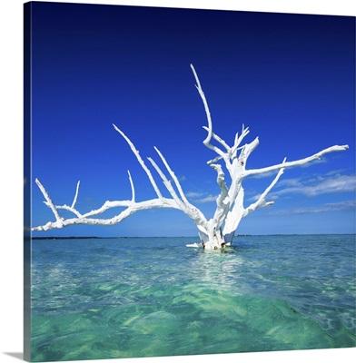 Bahamas, Harbor Island, Caribbean sea, Atlantic ocean, Caribbean