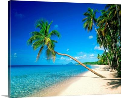 Beach with palm tree