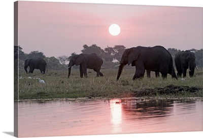 Botswana, Chobe, Chobe National Park, Elephants at sunset on Chobe Riverfront