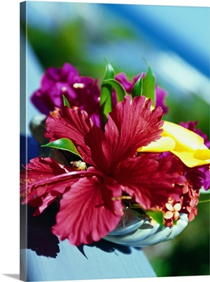 British Virgin Islands, Virgin Gorda, Biras Creek resort Particular of a flower