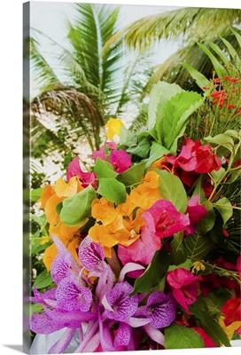 British West Indies, Anguilla, Bouganvillea, Malliouhana Hotel and Spa