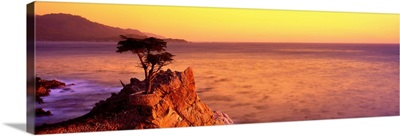 CA, Monterey Peninsula, silhouette of the famous Lone Cypress Tree on Big Sur