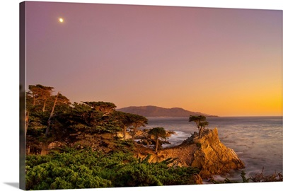 CA, Monterey Peninsula, The silhouette of the famous Lone Cypress Tree