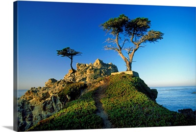 California, Carmel, view of the Lone Cypress