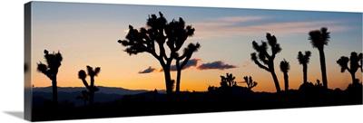 California, Joshua Tree National Park