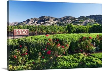 California, Napa Valley, Vineyard and hills