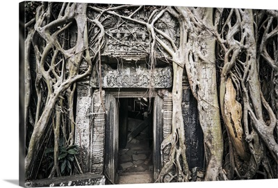 Cambodia, Siemreab, Angkor, Tree roots growing around the ancient Tha Phrom Temple