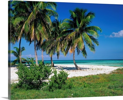 Caribbean, Belize, Coral reef, Coff's Cay