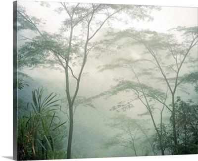 Central America, Costa Rica, Tropics, Rainforest