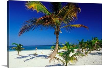 Central America, Mexico, Yucatan, Playa Akumal