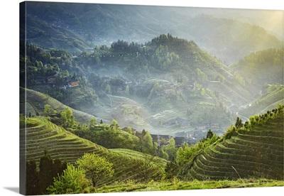 China, Guangxi, Guilin, Dragon's Backbone rice terraces, Longji, Longsheng