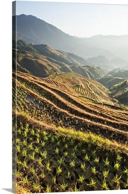 China, Guangxi, Longsheng Rice Terraces at Longji