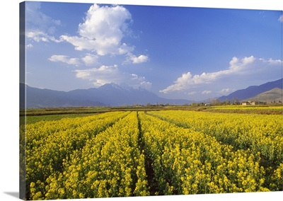 China, Yunnan, Cultivated fields and Jade Dragon Snow Mountain in background