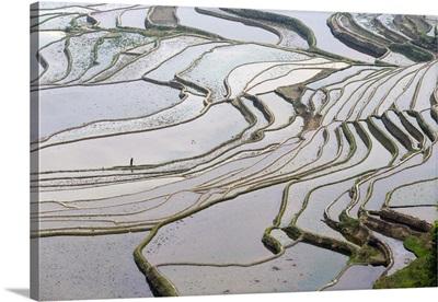 China, Yunnan, Yuanyang, Farmer walking amongst the Hani rice terraces