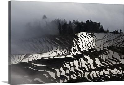 China, Yunnan, Yuanyang, Rice Terraces