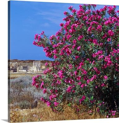Cyprus, Paphos, Archeological District, house of Theseus