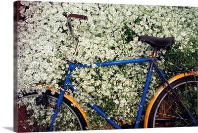 Denmark, Bornholm island, bicycle