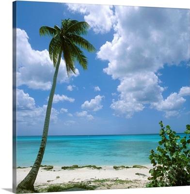 Dominican Republic, Caribbean, Dominicus Beach