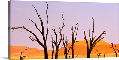 Dry tree in middle of desert, Namibia