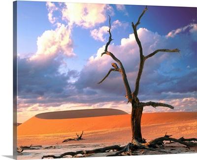 Dunes with tree, Namibia, Naukluft Park