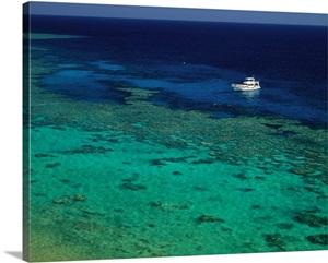 Egypt North Africa Red Sea Sharm El Sheikh Coral Reef
