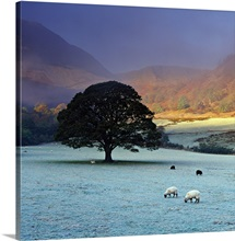 England, Cumbria, Great Britain, Lake District, Dawn