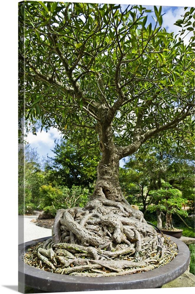 Florida, Delray Beach, Morikami Museum And Japanese Gardens