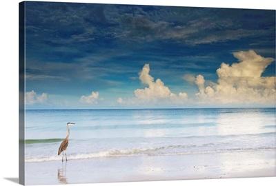 Florida, Saint Petersburg, Saint Petersburg Beach, Great Blue Heron