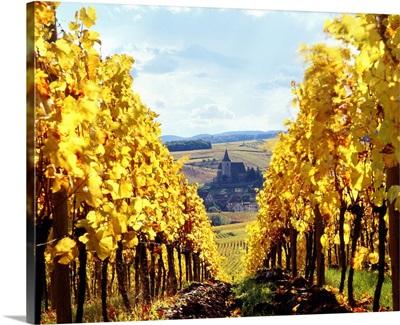 France, Alsace, Hunawihr, Vineyard